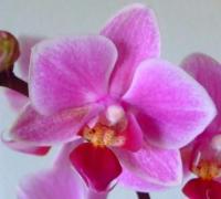 uppsala escort thaimassage fruängen